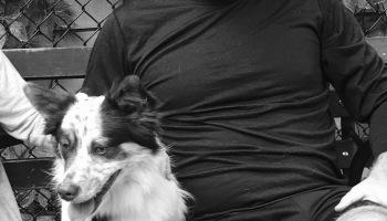 Lola, the Corgi, Border Collie, Australian Shepherd mix he said