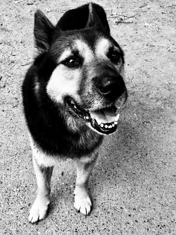 Unconditional Love Dog Rescue York